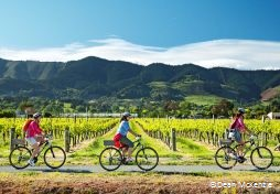 Marlborough Sounds vineyards - Photo by Dean McKenzie