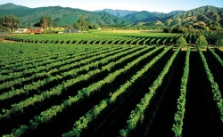Marlborough Sounds vineyards